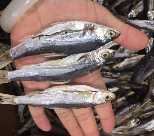 江西省九江市潯陽區餐鰷魚 小白條 餐魚 藍刀 咸魚 臘魚 5斤起批