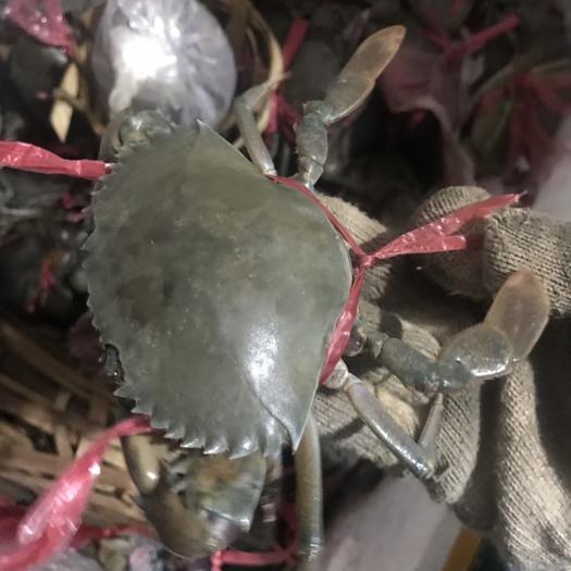 浙江省杭州市蕭山區青蟹 進口緬甸蟹,肉質飽滿,歡迎老板咨詢
