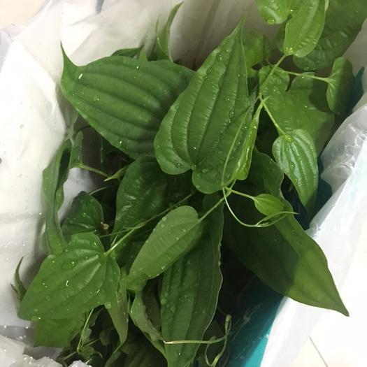 廣西壯族自治區貴港市港北區 大量供應廣西百部苗 2.5元