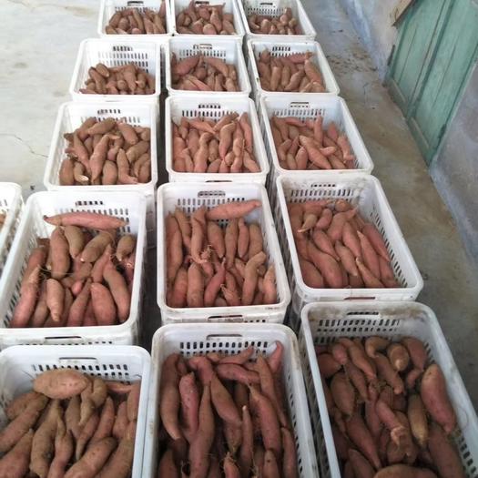 遼寧省大連市普蘭店區西瓜紅 紅皮 6兩~1斤
