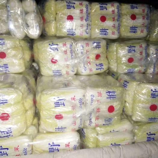 山東省臨沂市蘭陵縣小娃娃菜 精品小娃娃,產地直銷,質量保證