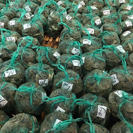 浙江省杭州市蕭山區 陽澄湖大閘蟹,肥美便宜,十幾元的貨往年要翻倍都難吃到禮盒套裝