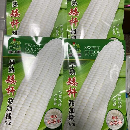 四川省成都市成華區 早熟矮桿甜糯玉米種子,棒大芯小口感好,產量高