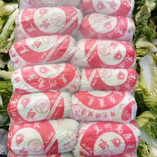 山東省臨沂市蘭陵縣 精品娃娃菜,產地直銷,質量保證