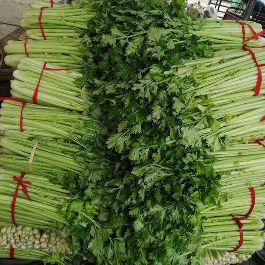 河南省南陽市新野縣西芹 45~50cm 0.5斤以下 大棚種植
