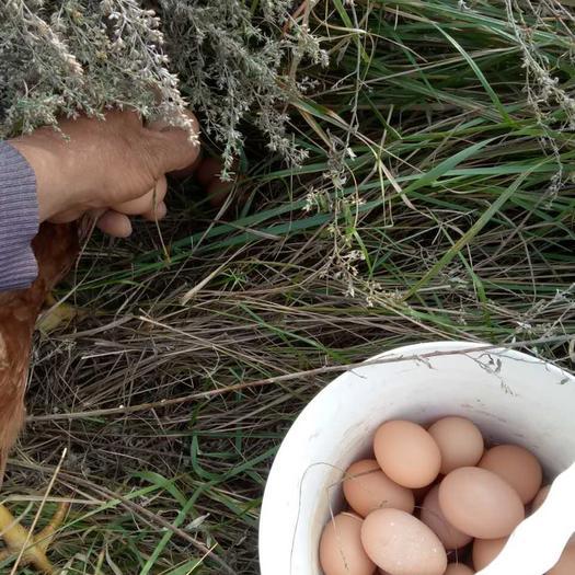 遼寧省大連市瓦房店市 海邊跑山雞蛋土雞蛋農村生態綠色笨雞蛋吃小魚小蝦的跑山雞蛋