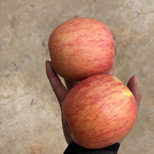 陜西省咸陽市乾縣紅富士蘋果 10萬斤紙加膜條紅紅富士出售