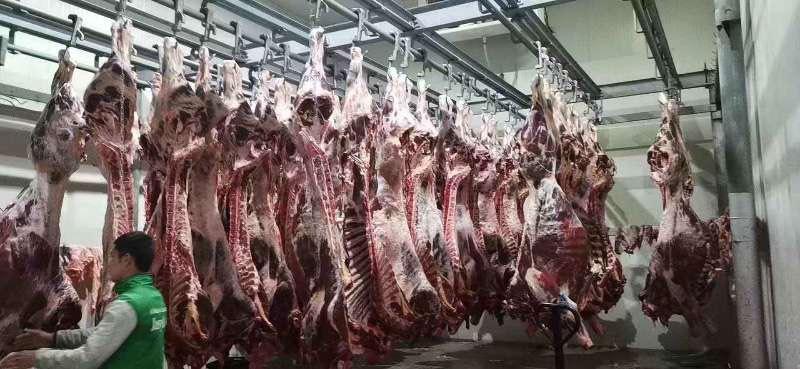 [四分体牛肉批发]四分体牛肉 哈萨克斯坦进口四分体带骨肉价格21.5元/斤