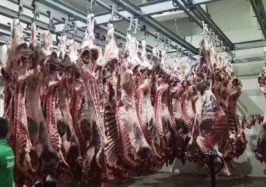 新疆維吾爾自治區伊犁哈薩克自治州霍爾果斯市四分體牛肉 哈薩克斯坦進口四分體帶骨肉