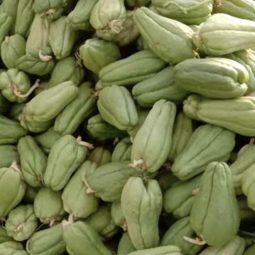 山東省青島市城陽區 佛手瓜苗,佛手瓜種都大量有貨,需要的聯系