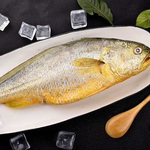 山東省青島市市北區冷凍黃花魚 黃花魚:兩條裝箱、凈重每條480克-550克