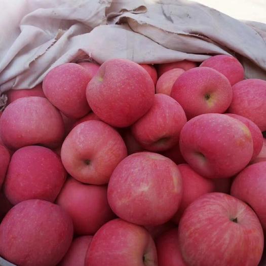 山东省烟台市栖霞市栖霞苹果 85mm以上 全红 纸袋