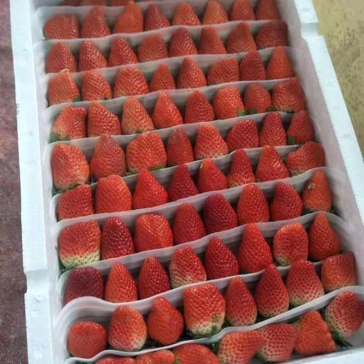 山东省青岛市平度市 平度甜宝草莓