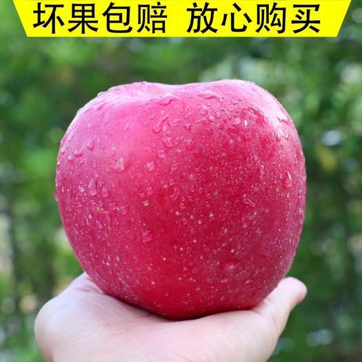 河南省安阳市北关区 【包邮】红富士苹果新鲜冰糖心10斤整发非水晶苹果孕妇水果