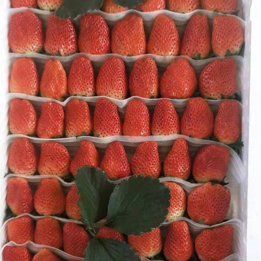山东省青岛市平度市 各种规格的草莓
