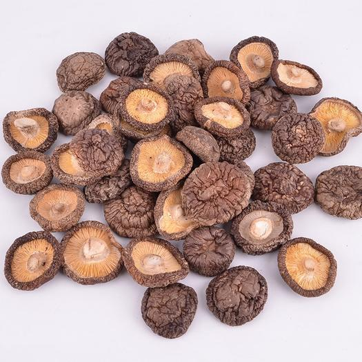 福建省宁德市蕉城区金钱菇 2.5cm~4cm 干香菇