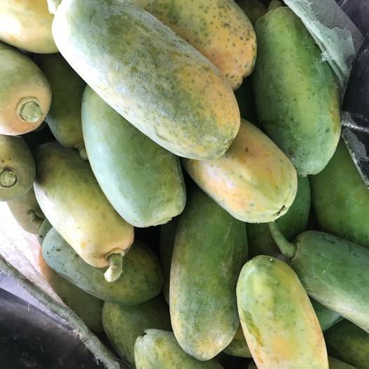 广东省云浮市罗定市大白木瓜 1.5 - 2斤