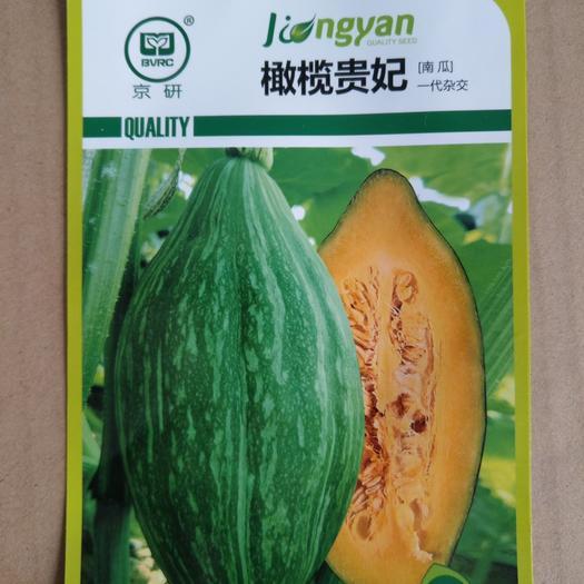 广东省梅州市平远县 橄榄贵妃南瓜种子