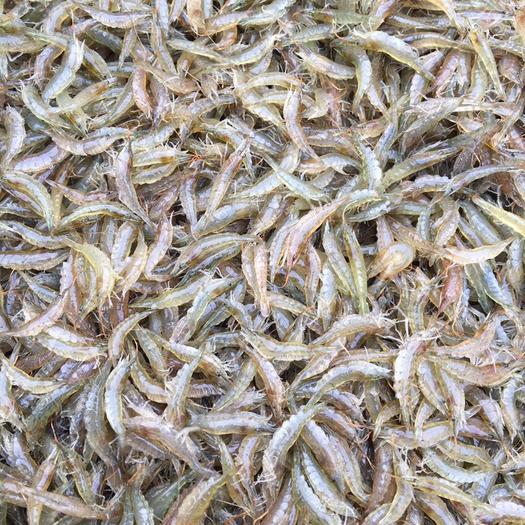 湖北省潛江市潛江市 米蝦,河蝦,蝦干,物美價廉,歡迎訂購
