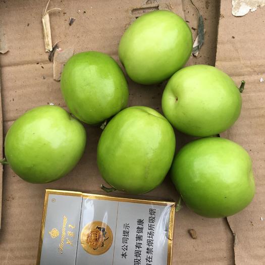 广西壮族自治区南宁市隆安县青枣 大量现货,个大,水份充足.甜度高