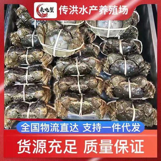 江苏省扬州市宝应县 大闸蟹,螃蟹,塘口直销,量大质优