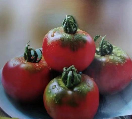 山东省泰安市泰山区草莓西红柿 精品 弧二以上 大红