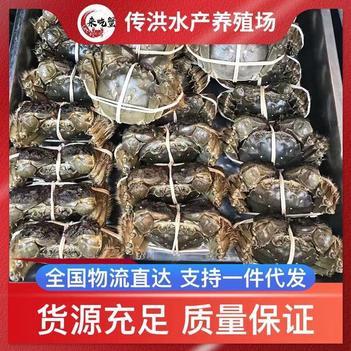 大閘蟹,河蟹,塘口直發,量大質優