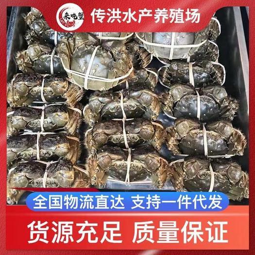江苏省扬州市宝应县 大闸蟹,河蟹,塘口直发,量大质优