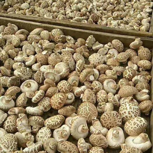 河南省信阳市浉河区 深山优质冬花菇出口精品好花菇自家种植包邮
