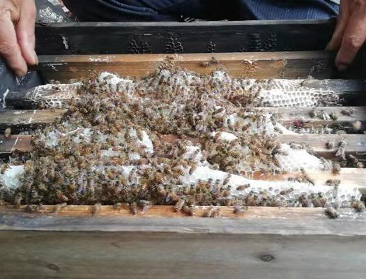 广西壮族自治区梧州市龙圩区 纯天然广西大山蜂蜜冬蜜,绿色无污染,假一陪十。