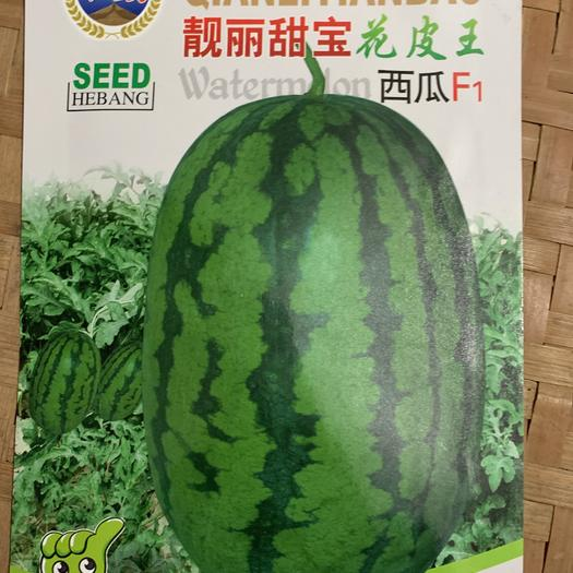 江西省赣州市瑞金市 和致靓丽甜宝花皮王西瓜 西瓜种子