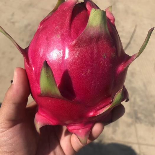 云南省红河哈尼族彝族自治州蒙自市 越南红心火龙果物美价廉,欢迎老板们订购