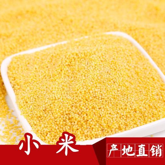 内蒙古自治区赤峰市克什克腾旗 小黄米小米月子米东北有机小黄米小米粥食用小米农家月子