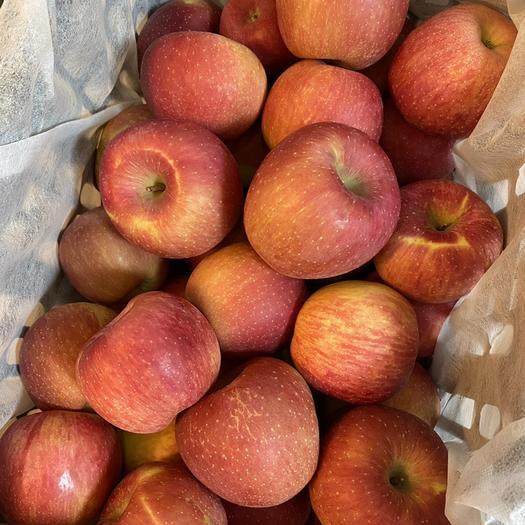 江蘇省宿遷市宿城區紅富士蘋果 95mm以上 全紅 光果