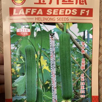 丝瓜种子 正源 玉升丝瓜 早中熟 瓜型靓 瓜长28~32cm