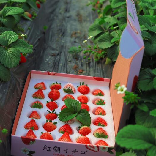 四川省成都市雙流區 成都雙流草莓紅顏巧克力草莓特大果禮盒2斤 發京東順豐空運