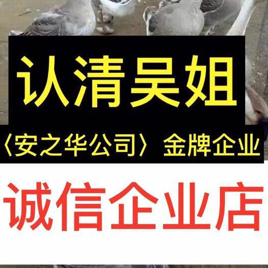 廣西壯族自治區南寧市西鄉塘區獅頭鵝苗 …是間20年誠信,無假貨企業店