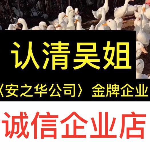 廣西壯族自治區南寧市西鄉塘區桂柳鴨苗 …是間20年誠信、無假貨企業店