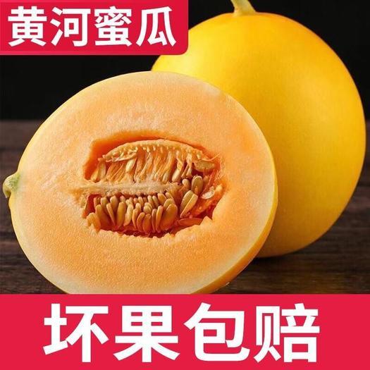 云南省昆明市官渡區 新鮮蜜瓜進口黃河蜜緬甸香瓜8斤現貨包郵