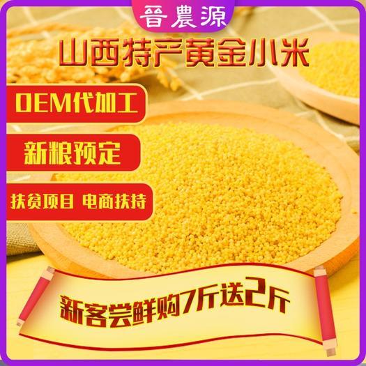 山西省忻州市繁峙县 山西特产黄金小米批发品质保证晋谷21号小米品牌电商供应