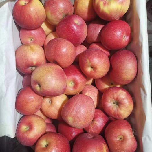 內蒙古自治區赤峰市松山區 赤峰蘋果新世界蘋果