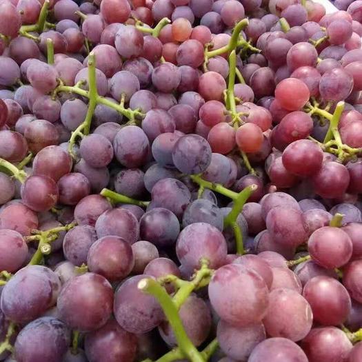 河北省石家庄市辛集市 巨峰葡萄
