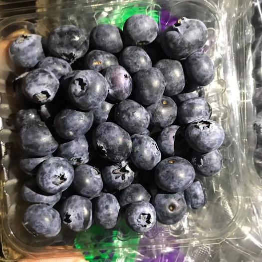 广东省汕头市澄海区 蓝莓,可视频看货,产地直销,可支持线上支付
