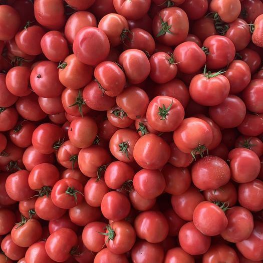 山東省淄博市臨淄區硬粉番茄 通貨 弧三以上 硬粉