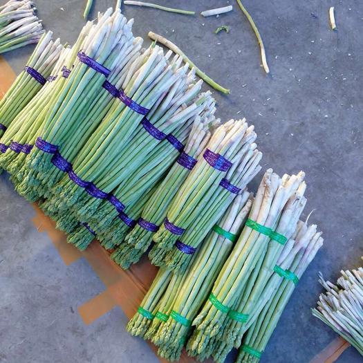 上海市崇明区绿芦笋 混装通货