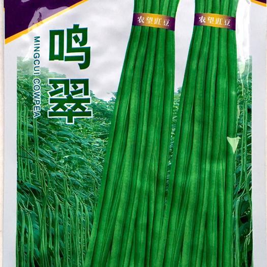 江苏省宿迁市沭阳县 豆角种子新种子大量现货供应