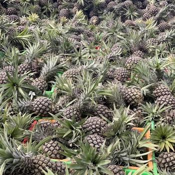 热带菠萝十斤装28.8包邮物美价廉