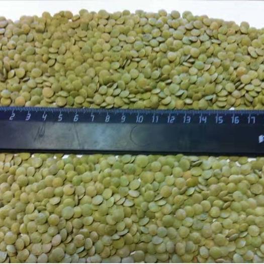 黑龙江省哈尔滨市香坊区 扁豆