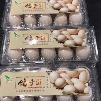 肉鸽蛋 食用 礼盒装