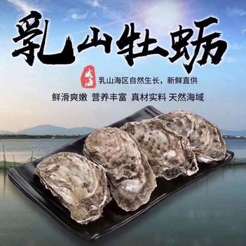 正宗乳山牡蠣5斤裝10斤裝
